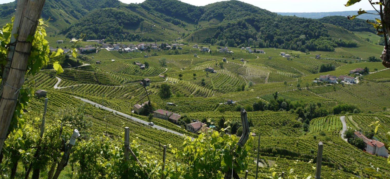 weinhandel zürich Weinhandlung Donat Gut Weinberge Prosecco Geblet